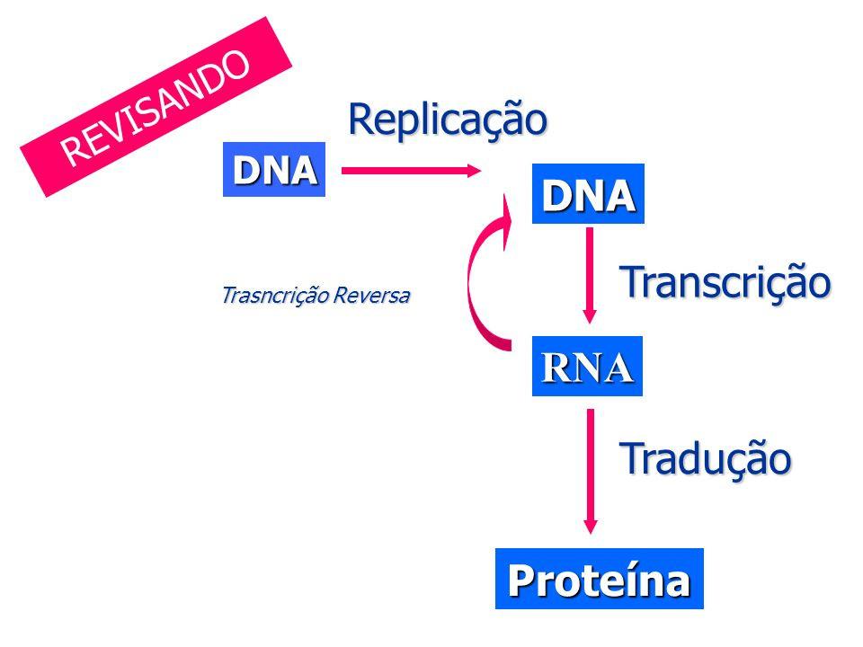 Resultado de imagem para transcrição e tradução do dna