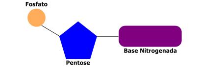 Resultado de imagem para nucleotídeo