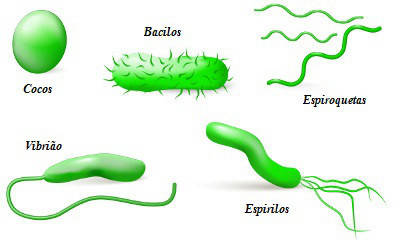 Resultado de imagem para bactéria formatos