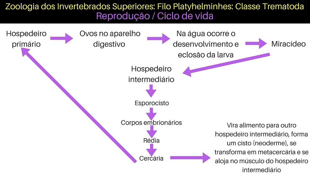 Zoologia dos Invertebrados Superiores_ Filo Platyhelminhes_ Classe Monogenea.jpg
