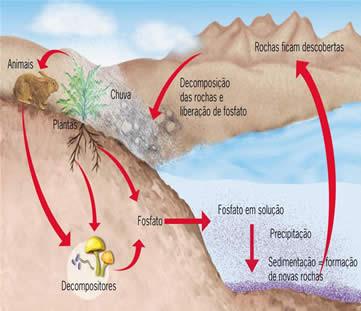 Ciclo do fósforo - Só Biologia