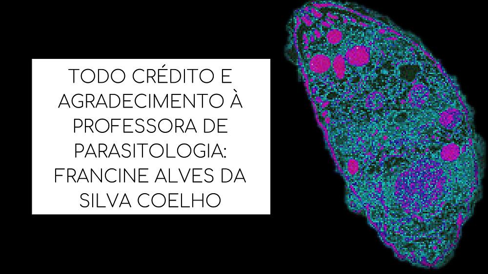 TODO CRÉDITO E AGRADECIMENTO À PROFESSORA DE PARASITOLOGIA_FRANCINE ALVES DA SILVA COELHO.jpg