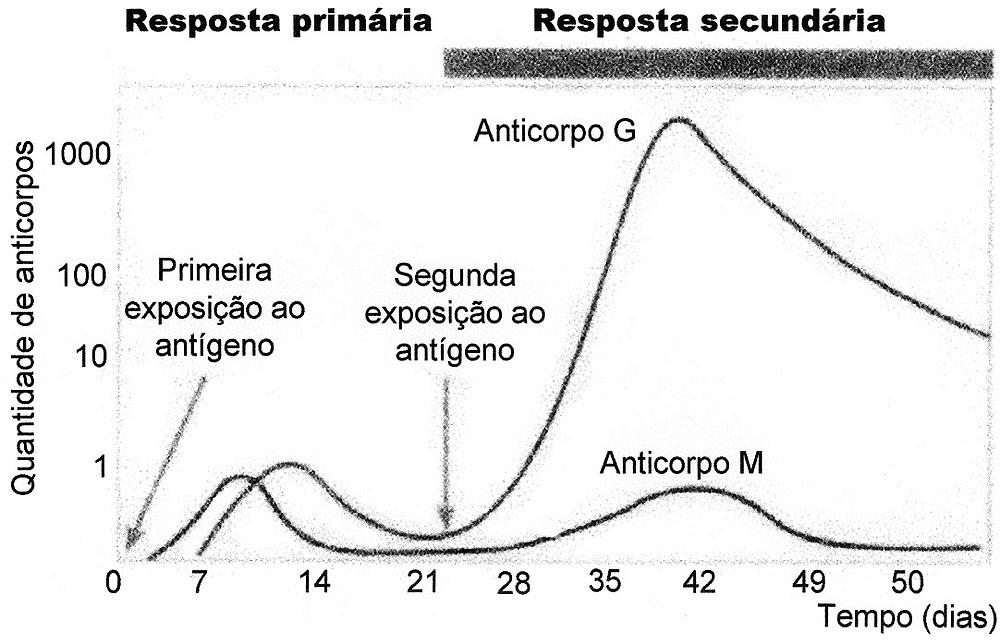 Resultado de imagem para vacina grafico