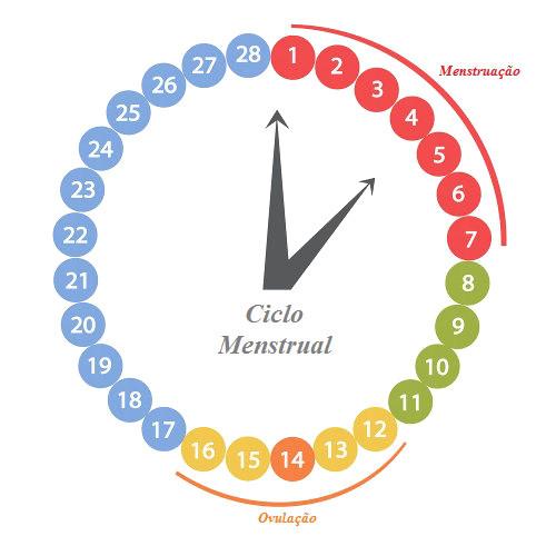 Resultado de imagem para ciclo menstrual
