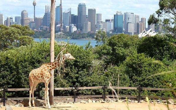 Zoo Taronga Sydney