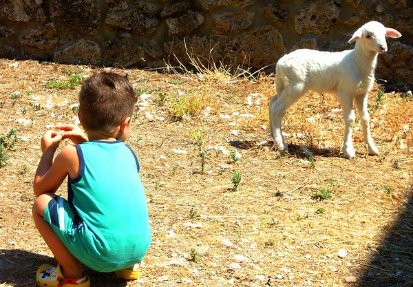 fattoria didattica in Umbria;animali;bambini;agriturismo con animali;Orvieto fattoria didattica
