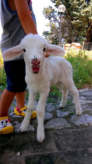 Orvieto fattoria didattica;bambini in agriturismo;fattoria didattica in Umbria;bambini in agriturismo;natura;relax