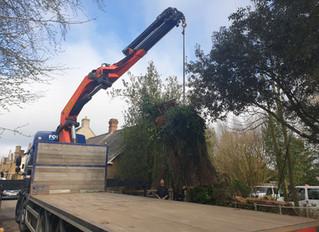 Transporting a tree stump for habitat!