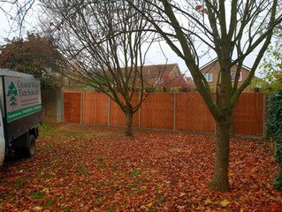 Fencing & tree surgery in St Neots.