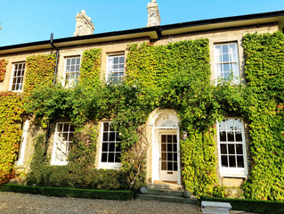 Pruning Parthenocissus at Paxton Place in Great Paxton, Cambridgeshire.