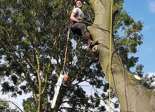 Tree Surgeon in St Neots