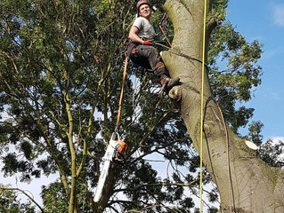 Tree Surgeon in St Neots