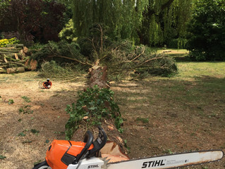 Welcome to Charlie Vince Tree Surgery