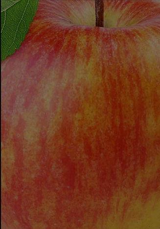 apple-bkgd1_edited_edited.jpg