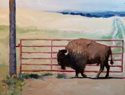 Urban Buffalo