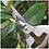 Thumbnail: Garden Scissor for Pruning Plants