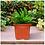 Thumbnail: UV Treated Square Plastic Planter (6 inches)