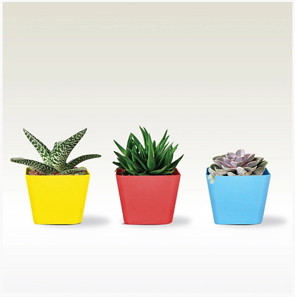 3.5 inch Square Succulent Planter(Red, Yellow and Teal )- Set of 3