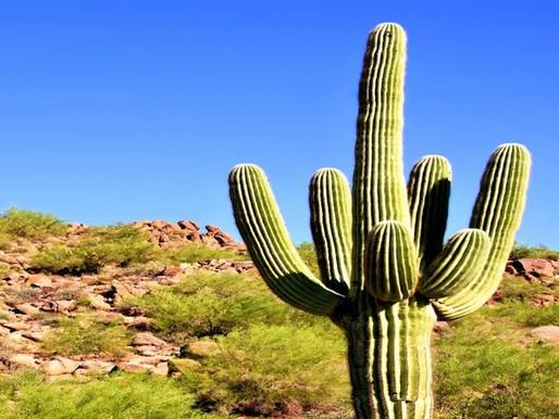 20 Best Cactus Plants | Must Have