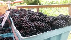 blackberry tailgate market