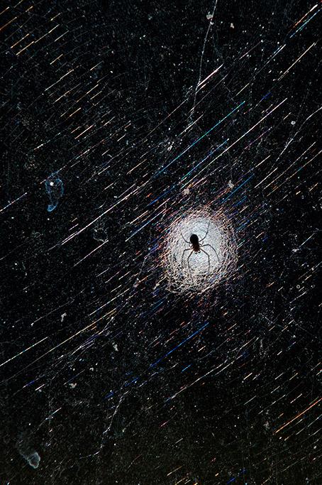 Glass_Spider°.JPG