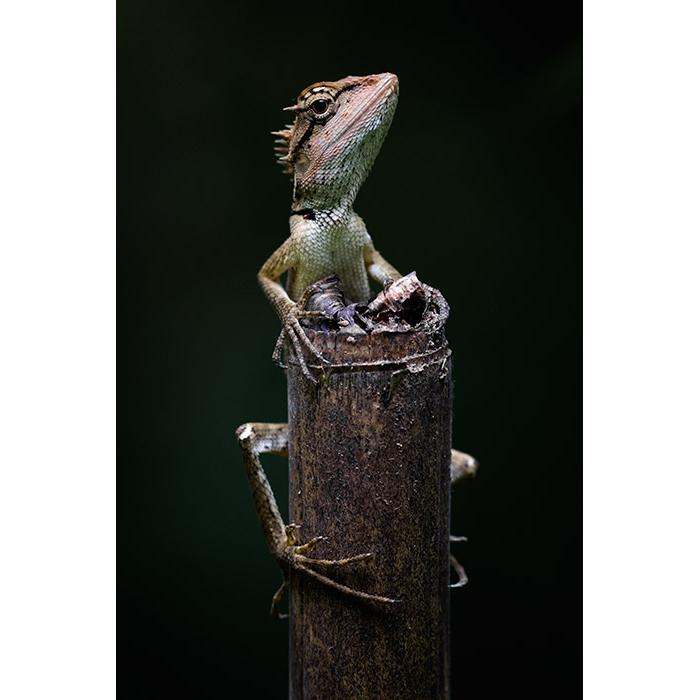 Lizard King.jpg