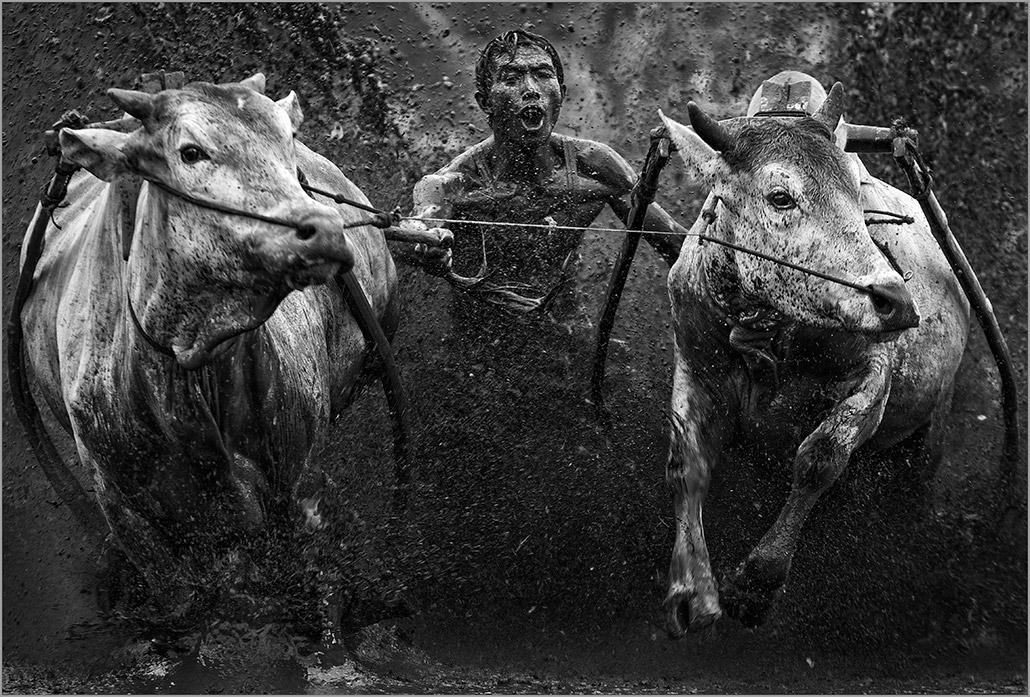 Pacu Jawi ~ 65.jpg