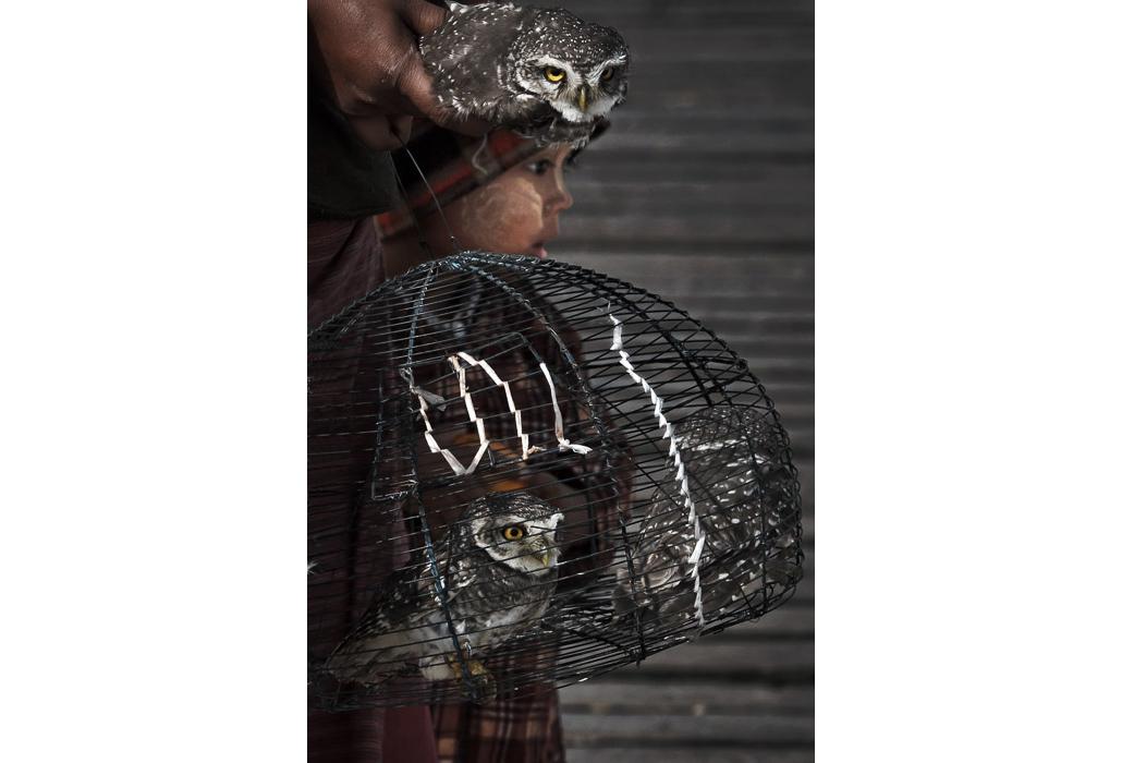 Owl Cage.jpg