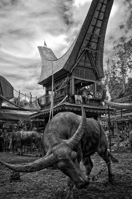Sa'dan Toraja ~ 9.jpg