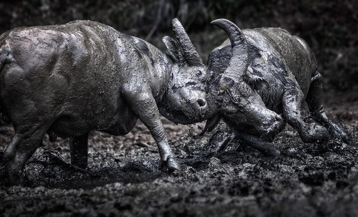 Bullfight~.jpg