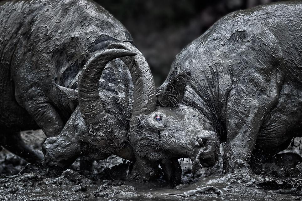 Bullfight ~ Enam.jpg