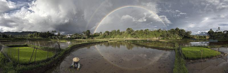 Rainbow Paddies_edited.jpg