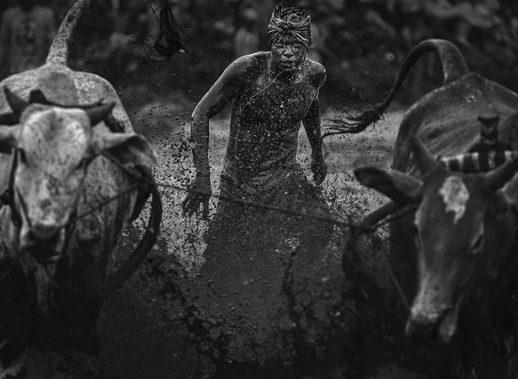 Pacu Jawi ~ 11.jpg