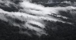 Hornbills, Mist & Gibboncalls_edited.jpg
