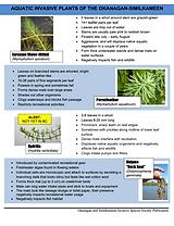 Aquatic Invasive Plants