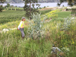 Dave with scotch thistle
