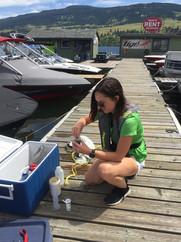 Sam sampling for invasive mussels at Turtle Bay Marina