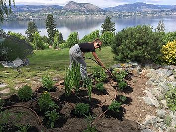 Weed pulling 2_Diane Ransom.jpg