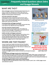 Invasive mussel questions