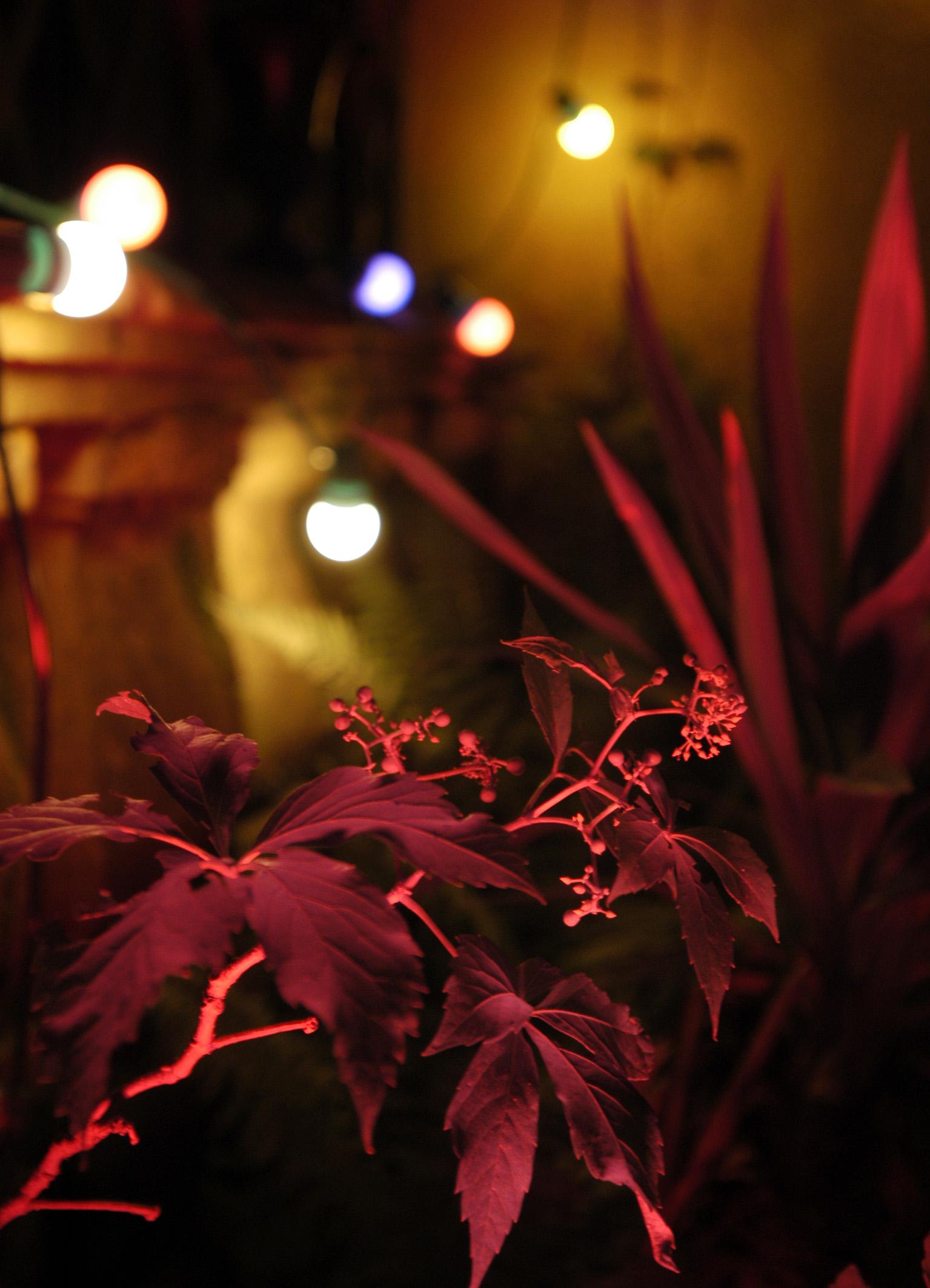 Ambiance soir jardin