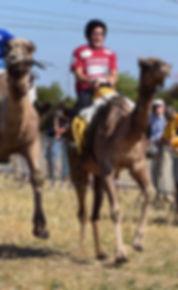 courses de dromadaires avec la federation francaise des chameaux