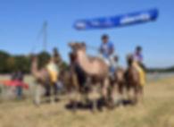 Depart d' une course de dromadaires france 2019 salon des camélidés avec la fédération francaise des chameaux et dromadaire picardie