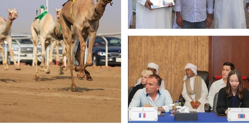 Le Chamelier de Picardie invité aux courses de dromadaires en Arabie Saoudite