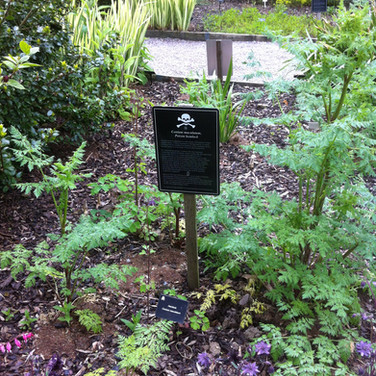 The poison garden at the Blarney Castle, Ireland
