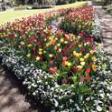 Leighton Gardens, Moss Vale