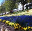 Springtime blooms in Edinburgh