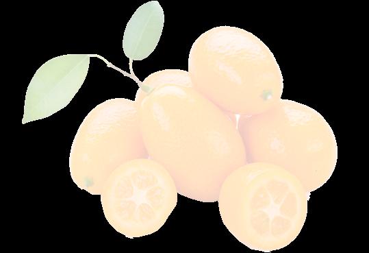 kumquats1_edited_edited_edited.png