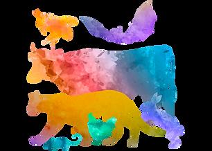 animals espejo.png