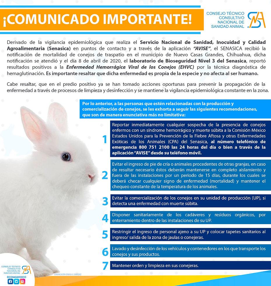 conejos 2020.jpg