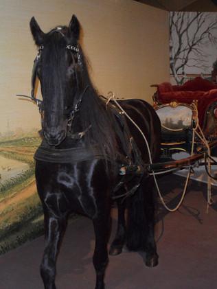 fries paard 4